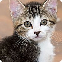 Adopt A Pet :: Andy - Irvine, CA