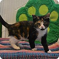 Adopt A Pet :: Sasha - Oyster Bay, NY