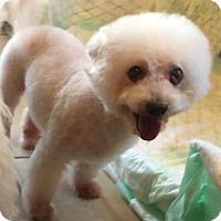 Adopt A Pet :: Mitsy - Edmond, OK