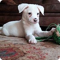 Adopt A Pet :: Natasha - Arden, NC
