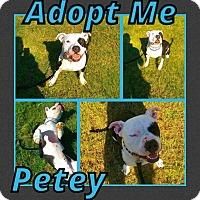 Adopt A Pet :: Petey - Cheney, KS