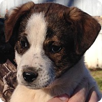 Adopt A Pet :: Kato - Allentown, PA