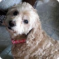 Adopt A Pet :: Muffin - Suffolk, VA