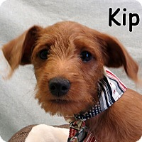 Adopt A Pet :: Kip - Warren, PA