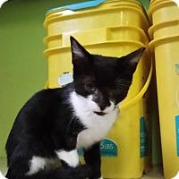 Adopt A Pet :: Sundance - St John, VI