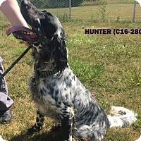 Adopt A Pet :: Hunter - Tiffin, OH