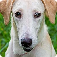 Adopt A Pet :: Button - Miami, FL