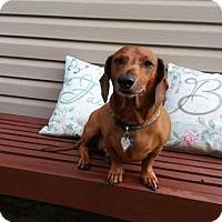 Adopt A Pet :: Maverick in WI - Columbia, TN