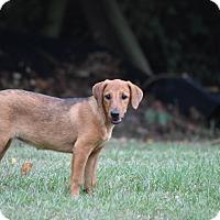 Adopt A Pet :: Tessa - Groton, MA