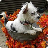 Adopt A Pet :: Olivia - New Oxford, PA