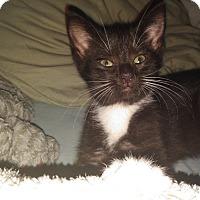 Adopt A Pet :: Flora - Whitehall, PA