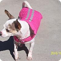 Adopt A Pet :: Lexie - Burgaw, NC
