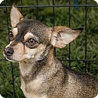 Adopt A Pet :: Ralph - Lodi, CA