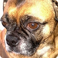 Adopt A Pet :: Berto - Grapevine, TX