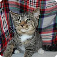 Adopt A Pet :: Pete - South Haven, MI