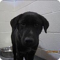 Adopt A Pet :: 16-12-3697d Gavin - Dallas, GA