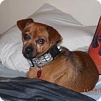 Adopt A Pet :: Holliday - haslet, TX