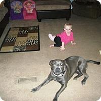 Adopt A Pet :: Chee Girl - Rancho Cucamonga, CA