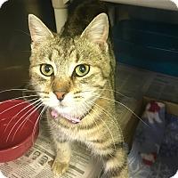 Adopt A Pet :: Almond - Visalia, CA
