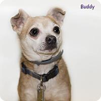 Adopt A Pet :: Buddy - Shamokin, PA