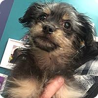 Adopt A Pet :: Jekyll - Thousand Oaks, CA