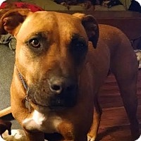 Adopt A Pet :: Allie - Gallatin, TN