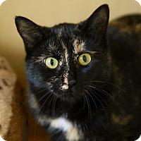 Adopt A Pet :: Minerva - Kettering, OH