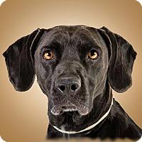 Adopt A Pet :: Addison - Prescott, AZ