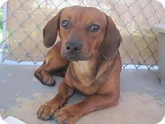 Hound (Unknown Type) Mix Dog for adoption in San Antonio, Texas - Michaelangelo