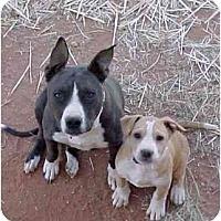 Adopt A Pet :: Autumn - Sierra Vista, AZ