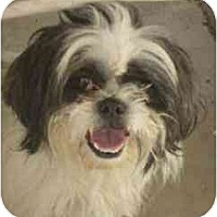 Adopt A Pet :: Chestnuts - Phoenix, AZ