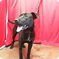 Adopt A Pet :: Shane - San Diego, CA