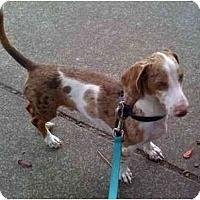 Adopt A Pet :: LYLE - Portland, OR