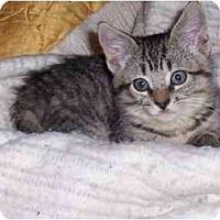 Adopt A Pet :: JMC-05-1-2 - Davis, CA