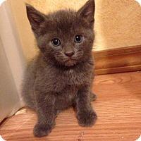 Adopt A Pet :: Mike - Bentonville, AR