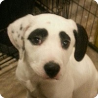 Adopt A Pet :: Cassie*ADOPTED!* - Chicago, IL