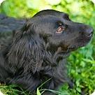 Adopt A Pet :: Oden