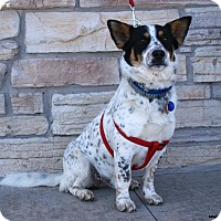 Adopt A Pet :: Jeffie - Newcastle, OK