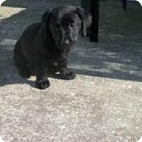 Adopt A Pet :: Mylo - Marlton, NJ