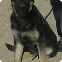 Adopt A Pet :: BARON - Corona, CA
