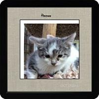 Adopt A Pet :: Pasture - McHenry, IL