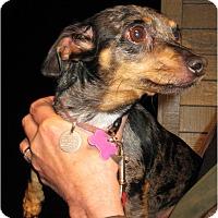 Adopt A Pet :: Penny - Salem, OR