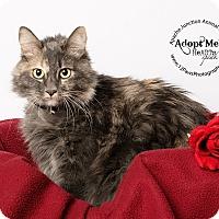 Adopt A Pet :: Kitty - Apache Junction, AZ