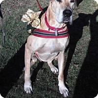 Adopt A Pet :: Emma - Baden, PA