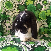 Adopt A Pet :: Barlobe - Paramount, CA