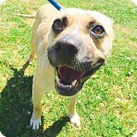 Adopt A Pet :: Hope - Atlanta, GA