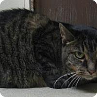 Adopt A Pet :: Tom - Gary, IN