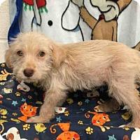 Adopt A Pet :: *DAFFODIL - Upper Marlboro, MD