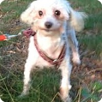 Adopt A Pet :: Shelbie, sweet & shy! - Snohomish, WA