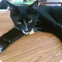 Adopt A Pet :: Oskar - Seminole, FL
